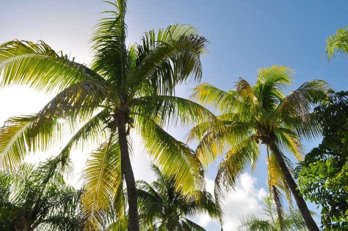 пальмы Гоа, Индия