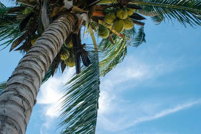 Таиланд море пальмы