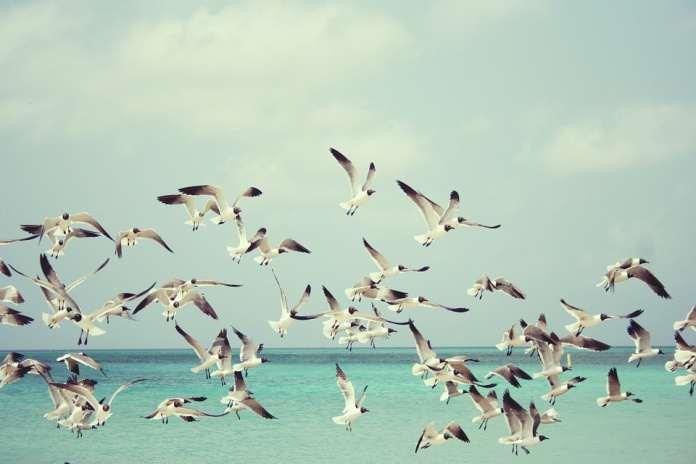 Болгария море чайки
