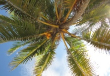 кокосовая пальма, небо