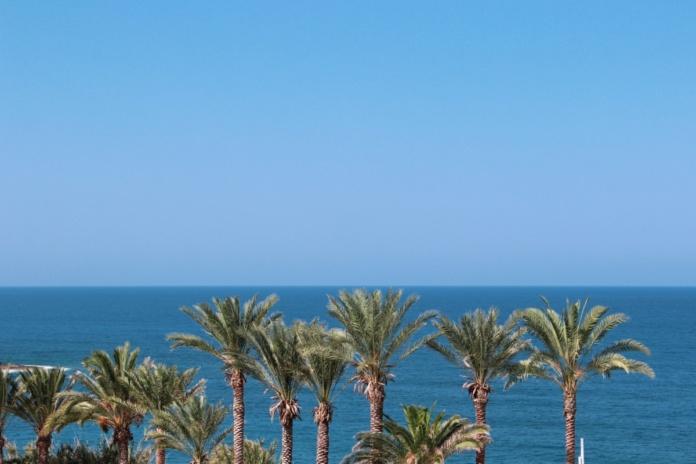 Кипр, пальмы