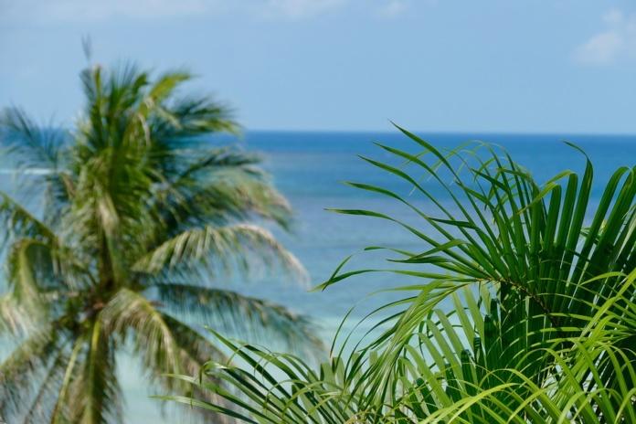 Пхукет море пальмы