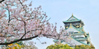 цветущая сакура япония
